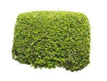 Groene geïsoleerde struik Stock Afbeelding