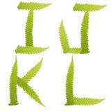 Groene geïsoleerdeh de bladerenvaren van het karakter Stock Foto's