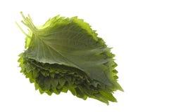 Groene Geïsoleerdel Bladeren Perilla stock afbeeldingen