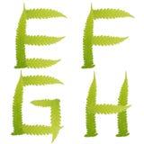 Groene geïsoleerdeo de bladerenvaren van het karakter Stock Foto