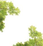 Groene geïsoleerdet bladeren Royalty-vrije Stock Foto's