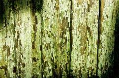 Groene gebarsten textuur Stock Afbeelding