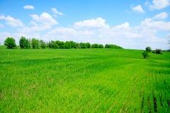 Groene gebied en bomen Royalty-vrije Stock Foto's