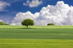 Groene gebied en boom met blauwe hemel en wolken Stock Fotografie