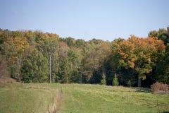 Groene gebied en de herfstbomen Stock Afbeeldingen