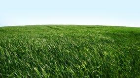 Groene Gebied en wind stock video