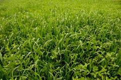 Groene Gebieden Stock Foto