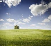groene gebieden Royalty-vrije Stock Foto