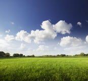 groene gebieden Stock Fotografie