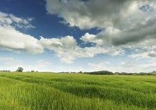 groene gebieden Stock Foto's