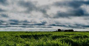 groene gebieden Royalty-vrije Stock Foto's