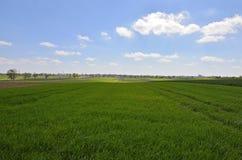 Groene gebieden in de lente Stock Foto's