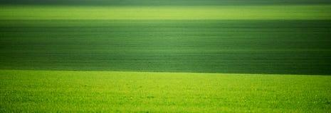 Groene gebieden in de lente Minimalism, groene heuvelige gebieden moldova stock foto's
