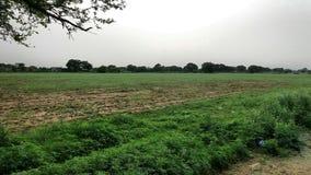 Groene gebieden in het land van Punjab stock foto's