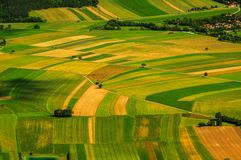 Groene gebieden luchtmening vóór oogst royalty-vrije stock foto