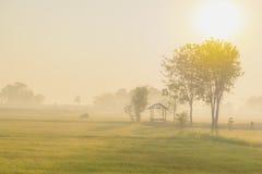 Groene gebieden in ochtend Stock Fotografie