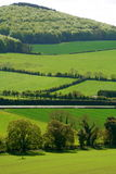 Groene Gebieden van Ierland Stock Foto's