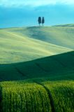 Groene gebieden van tarwe Stock Fotografie