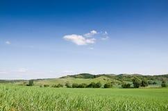 Groene gebiedsachtergrond Royalty-vrije Stock Afbeelding