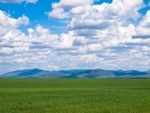 Groene gebiedsachtergrond Royalty-vrije Stock Foto