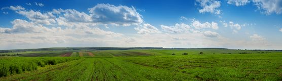 Groene gebiedstarwe en cloudly hemelpanorama royalty-vrije stock foto