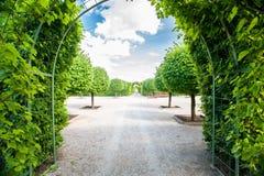 Groene gebladertetunnel en steeg met ronde gevormde basswood bomen Royalty-vrije Stock Foto