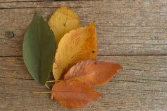 Groene, gele en oranje bladeren op de oude houten lijst De herfst Stock Foto's