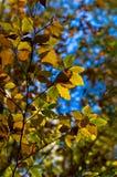 Groene, gele en oranje bladeren tegen blauwe hemel op een de herfst zonnige dag Royalty-vrije Stock Foto's