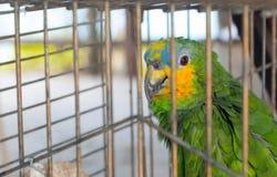 Papegaai in kooi royalty-vrije stock foto's