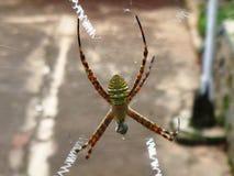 Groene gele spin stock afbeelding