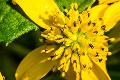 Groene Geleide kegel-Bloem in Sunny Meadow royalty-vrije stock afbeelding