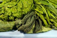 Groene gemengde bladgroenten, royalty-vrije stock afbeeldingen