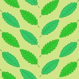 Groene geometrisch gevestigde bladeren Stock Fotografie