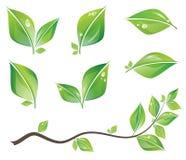 Groene geplaatste bladeren Stock Foto
