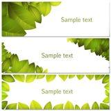 Groene geplaatste bladerenbanners Royalty-vrije Stock Foto