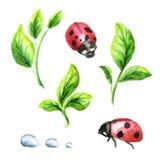 Groene geplaatste spruiten en lieveheersbeestjes royalty-vrije illustratie