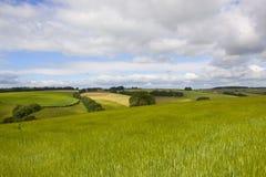 Groene gerstgebieden Royalty-vrije Stock Afbeeldingen