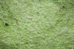 Groene gevoelde textuur Royalty-vrije Stock Foto