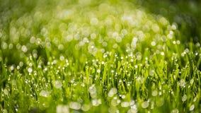 Groene glazen Royalty-vrije Stock Foto's