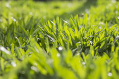 Groene glazen Stock Foto