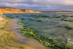 Groene golven Stock Fotografie