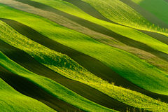 Groene golvende heuvels in Zuid-Moravië Royalty-vrije Stock Afbeelding