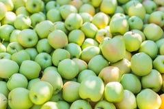 Groene Gouden appelen (- heerlijk) Stock Fotografie