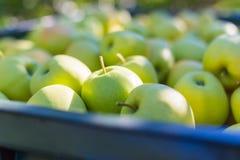 Groene Gouden appelen (- heerlijk) Stock Foto's