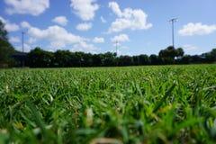 Groene gras blauwe hemelen Royalty-vrije Stock Foto