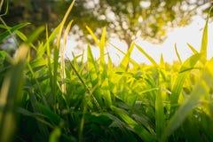 Groene gras bosbomen Royalty-vrije Stock Foto's