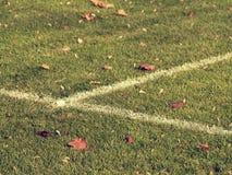 Groene gras dichte omhooggaand als achtergrond stock foto