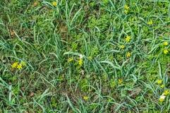 Groene gras en bloemen royalty-vrije stock afbeelding