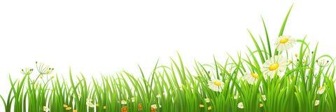 Groene gras en bloemen royalty-vrije illustratie