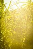 Groene gras en bloemen Zonsondergang, August Walking in de weide stock afbeelding